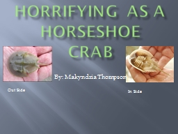 Horrifying As A Horseshoe Crab