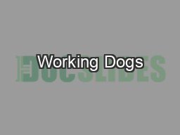 Working Dogs PowerPoint PPT Presentation