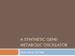 A synthetic Gene-metabolic Oscillator