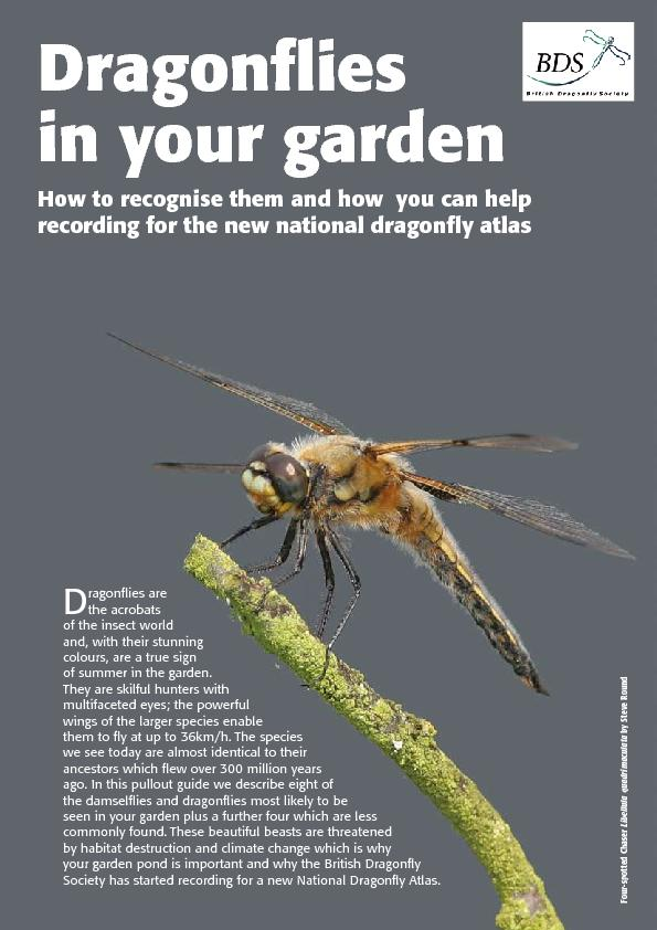 in your gardenHow to recognise them and how  you can help recording fo PowerPoint PPT Presentation