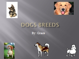 Dogs Breeds PowerPoint PPT Presentation