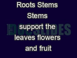 Roots Stems Stems support the leaves flowers and fruit