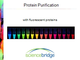 Protein Purification PowerPoint PPT Presentation