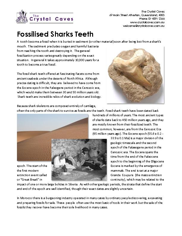 Fossilised Sharks Teeth