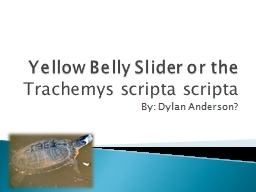 Yellow Belly Slider or the