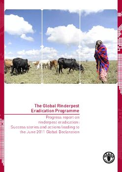 The Global Rinderpest Eradication Programme Progress report on rinderpest eradication Success stories and actions leading to the June  Global Declaration Maps show FAOs understanding of epidemiologica