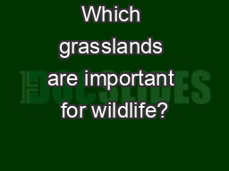 Which grasslands are important for wildlife?