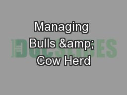 Managing Bulls & Cow Herd