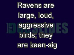 Ravens are large, loud, aggressive birds; they are keen-sig