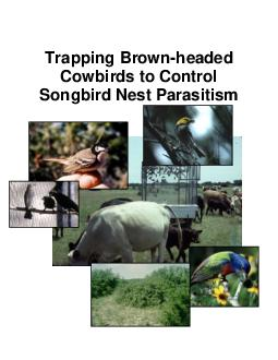 Trapping Brownheaded Cowbirds to Control Songbird Nest Parasitism PWD BK W Trapping Brownheaded Cowbirds The purpose of this guide is to assist landowners that wish to help songbird reproduction by bu