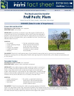 IMPORTANCE AS A PEST ON PLUM: