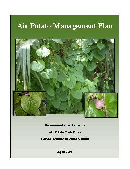 Air Potato Management Plan            Recommendations from the Air Po PowerPoint PPT Presentation