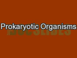 Prokaryotic Organisms PowerPoint PPT Presentation