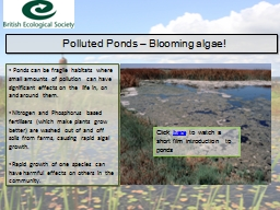 Polluted Ponds – Blooming algae! PowerPoint PPT Presentation