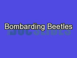 Bombarding Beetles