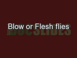 Blow or Flesh flies