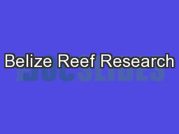 Belize Reef Research PowerPoint PPT Presentation