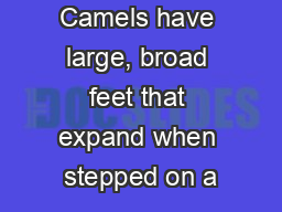 Camels have large, broad feet that expand when stepped on a