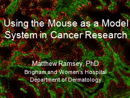 Using the Mouse as a Model System in Cancer Research