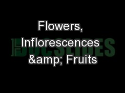 Flowers, Inflorescences & Fruits PowerPoint PPT Presentation