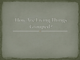 How Are Living Things Grouped?