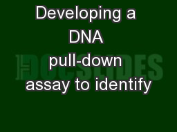 Developing a DNA pull-down assay to identify