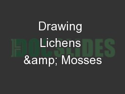 Drawing Lichens & Mosses