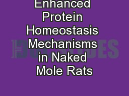 Enhanced Protein Homeostasis Mechanisms in Naked Mole Rats