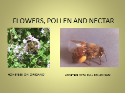 FLOWERS, POLLEN AND NECTAR