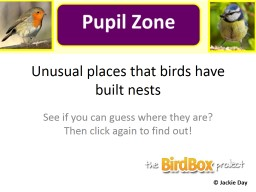 Unusual places that birds have built nests PowerPoint PPT Presentation