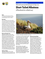 Status The shorttailed albatross is listed as endanger