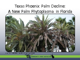 Texas Phoenix Palm Decline: