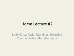 Horse Lecture #2