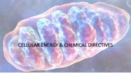 Cellular Energy & Chemical Directives