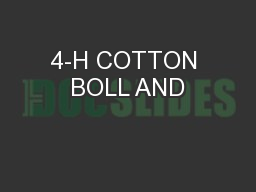4-H COTTON BOLL AND PowerPoint PPT Presentation