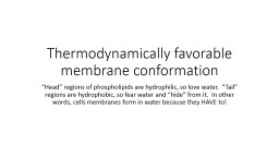 Thermodynamically favorable membrane conformation