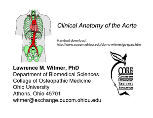 Clinical Anatomy of the Aorta Clinical Anatomy of the