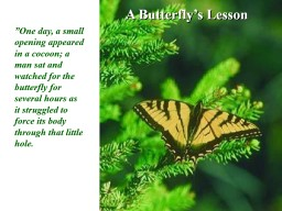 A Butterfly's Lesson PowerPoint PPT Presentation