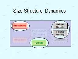 Size Structure Dynamics PowerPoint PPT Presentation