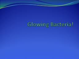Glowing Bacteria! PowerPoint PPT Presentation