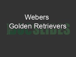Webers Golden Retrievers