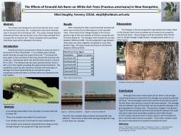 The Effects of Emerald Ash Borer on White Ash Trees (