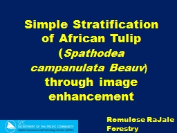Simple Stratification of African Tulip