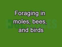 Foraging in moles, bees, and birds