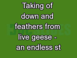 Taking of down and feathers from live geese - an endless st