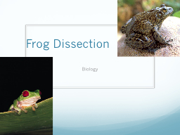 Frog Dissection