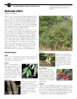 Michigan Department of Natural Resources Michigan Natural Features Inventory  Invasive SpeciesBest Control Practices Autumn olive Elaeagnus umbellata Autumn olive is native to Asia and was introduced