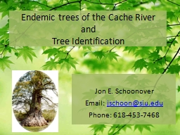 Endemic trees of the Cache River