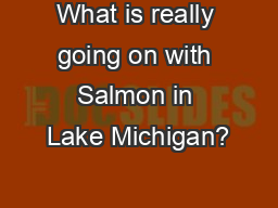 What is really going on with Salmon in Lake Michigan?
