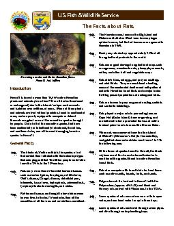 The Facts about Rats